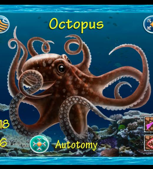 Cr Octopus